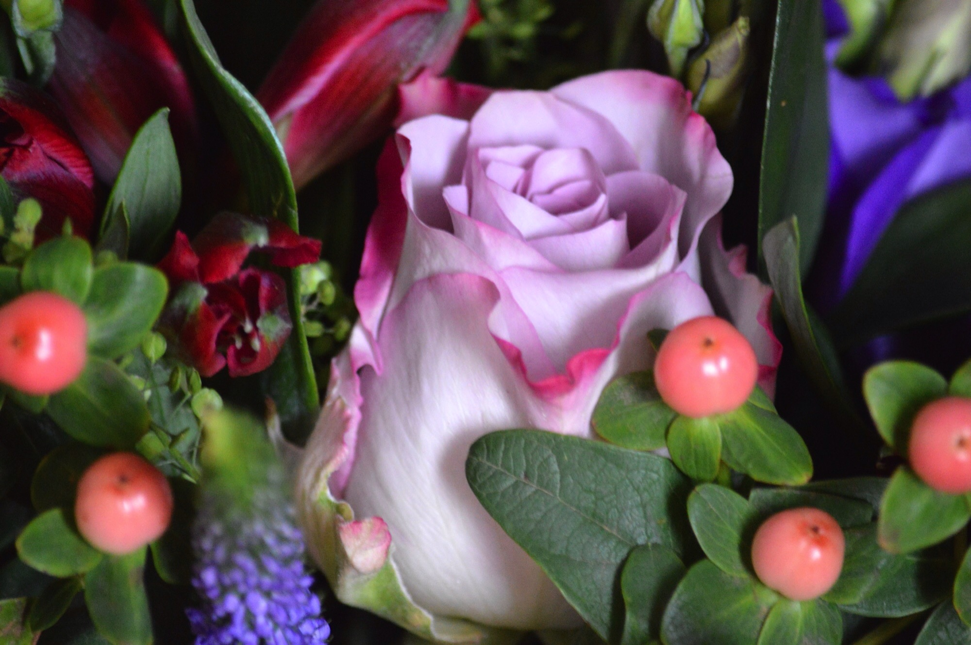 Blossoming gifts review not a frumpy mum plants and personalised gifts making it not just a place to visit if you are after cheap flowers they have a great selection of flowers for under 20 izmirmasajfo Image collections