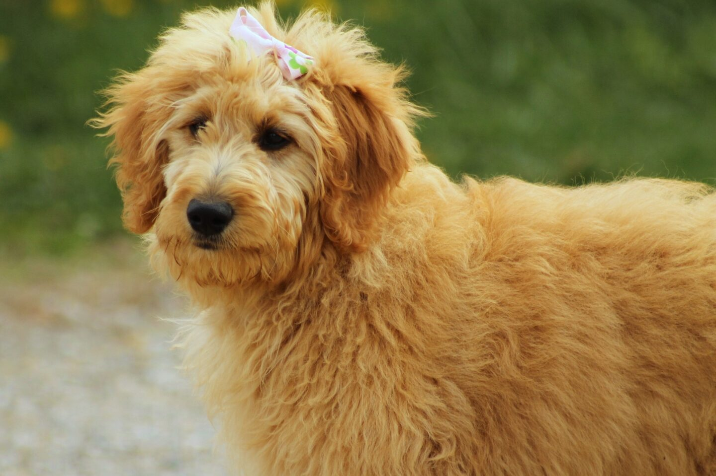 Choosing The First Pet? Take a Look at These Pooches