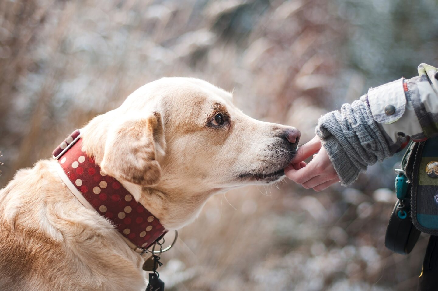 Dog Essential – 8 Things To Carry in Your Bag Always